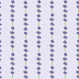Lavender. Seamless pattern with flowers. Hand Royalty Free Stock Photography