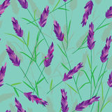 Lavender Seamless Pattern_eps Stock Photos