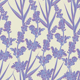 Lavender seamless pattern. Royalty Free Stock Photo