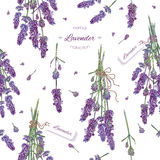 Lavender seamless pattern. Vector lavender flower seamless pattern. Background design for natural cosmetics, beauty store, health care products, perfume Stock Photography