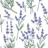Lavender seamless pattern vector stock illustration