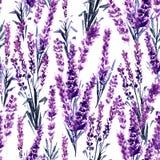 Lavender Seamless Pattern. Watercolor or Aquarelle Paintings of Lavandula. Lavender Field Seamless Pattern. Watercolor or Aquarelle Paintings of Provence stock illustration