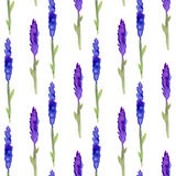 Lavender seamless pattern in watercolor. Pattern for fabric, paper and other printing and web projects. Watercolor background Stock Images