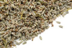 Lavender seeds Stock Images