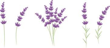 Lavender. Set of five flowers lavender