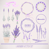 Lavender set Stock Images