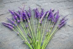 Lavender on a shale stone Stock Photo