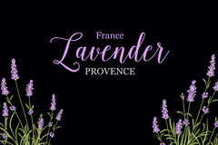 Lavender sign label Stock Photography