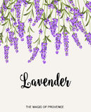 Lavender sign label Royalty Free Stock Photography
