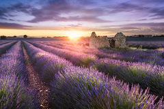 LAVENDER IN SOUTH OF FRANCE Royalty Free Stock Images