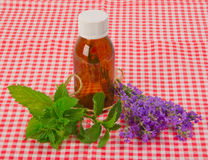 Lavender and spearmint Royalty Free Stock Photo
