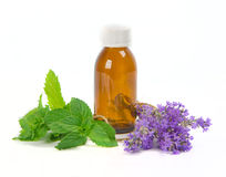 Lavender and spearmint Royalty Free Stock Photography
