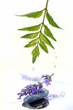Lavender splash stock photography