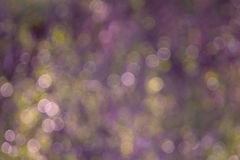 Lavender Spring Nature Bokeh. Beautiful lavender and green nature bokeh background royalty free stock images