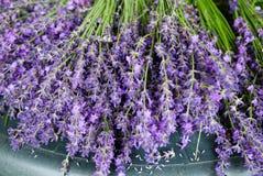 Lavender Stalks Royalty Free Stock Images