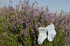 Lavender stems and baby boy socks in a field Stock Images