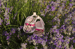 Lavender stems in a field with baby shoes. Lavender stems in a field with pink baby girl shoes stock photo
