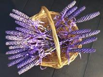 Lavender. Sticks in basket Stock Images