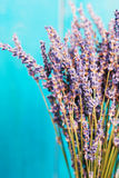 Lavender still-life on the blue background Royalty Free Stock Photos