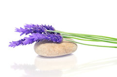 Lavender and stone Stock Photography