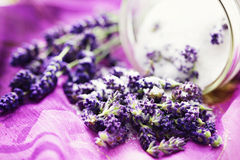 Lavender sugar Royalty Free Stock Images