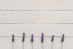 Lavender - summertime Royalty Free Stock Images