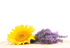 Lavender and sunflower. Stock Images
