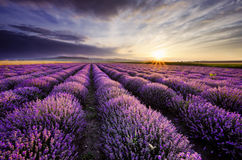 Lavender Sunrise. Sunrise and dramatic clouds over Lavender Field Royalty Free Stock Photography