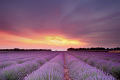 Lavender sunset. Sunset over a summer lavender field in Provence, France Stock Image