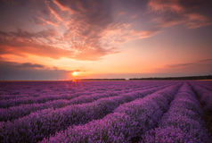 Lavender sunset royalty free stock images