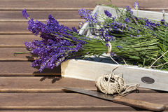 Lavender tied with string Stock Photo