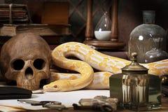 Lavender Tiger Albino snake Stock Photo