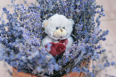 Lavender and toy bear in the basket Royalty Free Stock Images
