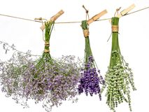 Lavender Variety Stock Photography