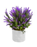 Lavender in vase Royalty Free Stock Photo