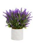 Lavender in vase Royalty Free Stock Image