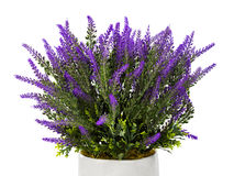 Lavender in vase. Isolated on white background Stock Photos