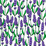 Lavender vector drawing seamless pattern.  wild flower and leaves. Herbal artistic style background. Lavender vector drawing seamless pattern.   wild flower and Stock Images