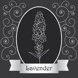 Lavender-06 Royalty Free Stock Photography