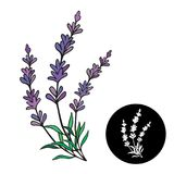 Lavender vector illustration. Lavender frame for provence card Royalty Free Stock Photo