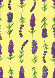 Lavender-02. Vector seamless pattern with a plant lavender on a yellow background Royalty Free Stock Photo