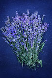 Lavender, view top Stock Image