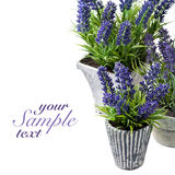 Lavender in vintage pots Royalty Free Stock Photo
