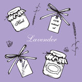 Lavender vintage set. Vintage hand drawn lavender vector illustration  on violet background. Engraving illustration. Collection of vintage bottles, lavender Stock Photos
