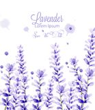 Lavender watercolor card Vector. delicate floral blooming decor. Wedding ceremony, postcard, Women day greeting. Beautiful pastel color stock illustration