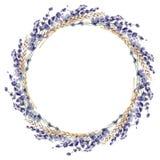 Lavender watercolor hand painted illustration floral flower prov. Ence france leaves plant wreath frame border cereal wheat stock illustration