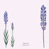 Lavender watercolor. Stock Image