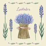 Lavender watercolor. Vector Illustration of a Lavender Background.Watercolor illustration for greeting cards, invitations Royalty Free Stock Images