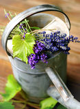Lavender and watering can Stock Photos