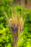 Lavender and wheat Stock Image